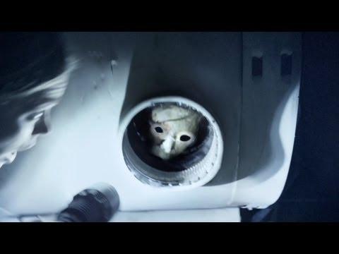 'The Banshee Chapter' Trailer