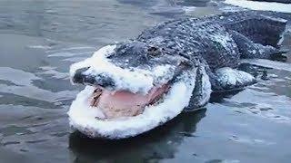 7 Animales Impactantes Congelados En El Hielo