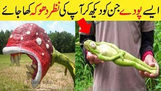 The most strangest and weird plants on earth | Top 5 Strangest Plants On Earth