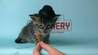 Kitten Wearing a Tiny Hat Eats a Tiny Ice-Cream Cone