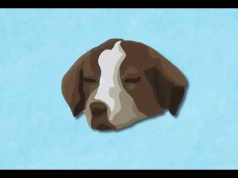 Best Dog Boarding Veterinarian Service | Greeley