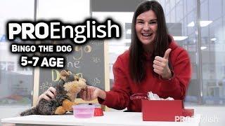 Bingo the dog /// ProEnglish /// 5-7 Age