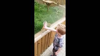 Monkey befriends 3 year old Grandson