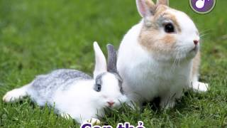 Dạy bé học nói - Tiếng kêu các loài động vật