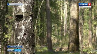 Дело чёрных лесорубов из Тарского района передано в суд