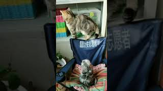 Cats are so funny you will die laughing 690