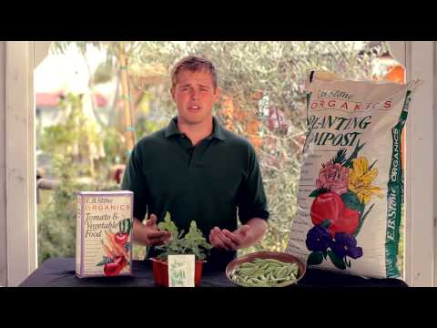 How To Plant Peas - Armstrong Garden Centers