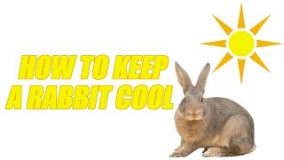 How To Keep A Rabbit Cool