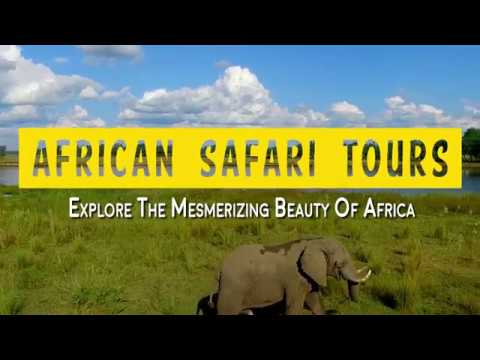 African Safari Tours - Explore The Mesmerizing Beauty Of Africa