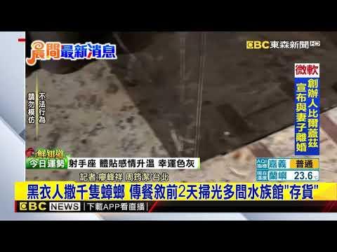 最新》黑衣人撒千隻蟑螂 傳餐敘前2天掃光多間水族館「存貨」@東森新聞 CH51