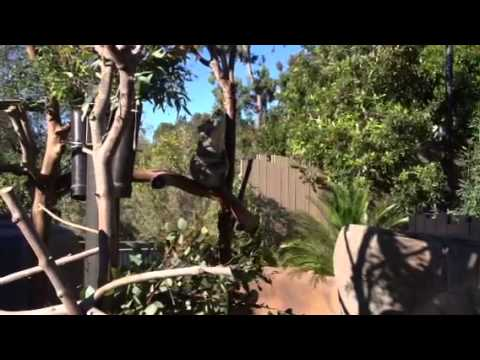 San Diego Family Visits the San Diego Zoo