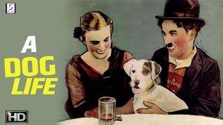 A Dogs Life - Charlie Chaplin Comedy Movie - HD