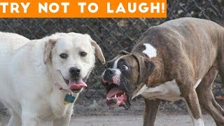 /try not to laugh at this ultimate funny dog video compilation funny pet videos