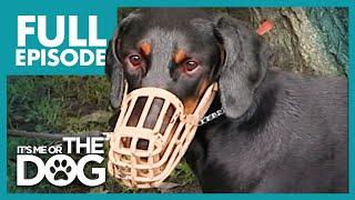 The Demonic Doberman: Harvey | Full Episode | It's Me or the Dog