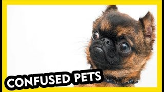 Confused Pets - Funniest Compilation Video Part 1