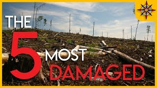 The 5 Most Damaged Forests on Earth