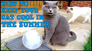 HOW TO KEEP YOUR CAT COOL IN SUMMER | CHRIS & EVE