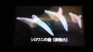 サメ3D図鑑