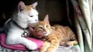 かご猫15