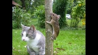 Crazy Funny Cats try not laugh 2018 Cat vs Mouse