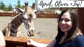 APRIL the GIRAFFE, Oliver & Baby Taj! ( Tajiri )❤️Animal Adventure Park, NY⛰️ SweetFamilyLife