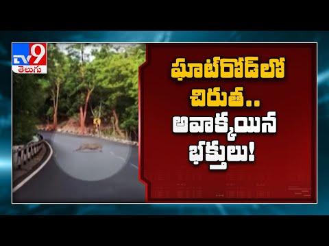 Leopard spotted in Tirumala, viral video