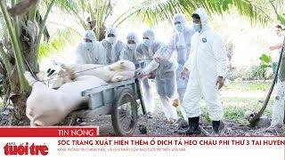 Sóc Trăng xuất hiện thêm ổ dịch tả heo châu Phi thứ 3 tại huyện Mỹ Xuyên