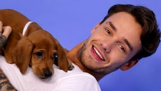 Liam Payne Plays With Puppies