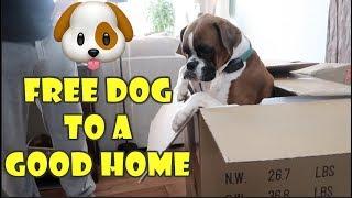 FREE DOG TO A GOOD HOME 🐶 (WK 359.4) | Bratayley