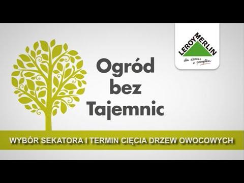 Termin cięcia drzew owocowych