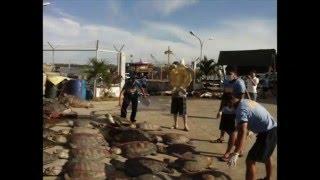 Ngư dân TQ phá san hô ở Biển Đông