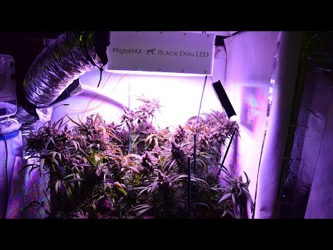200 Watt 7 Ounce LED Cannabis Grow
