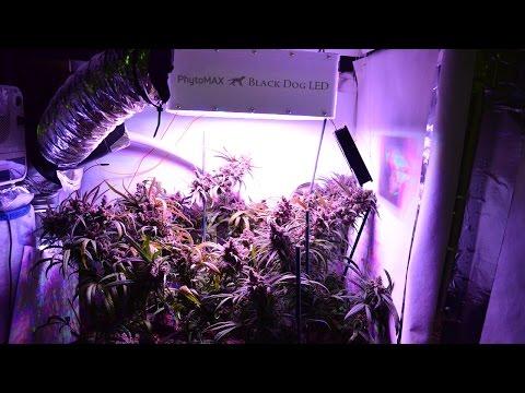 200 Watt 7 Ounce LED Cannabis Grow
