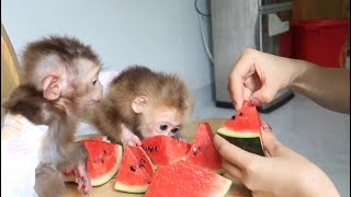 Summer of the monkey babies - cool watermelon