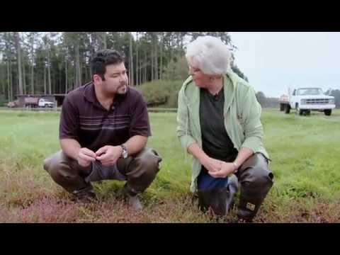 CranMac Farms - Cranberry Farmers