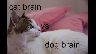 cat brain vs dog brain