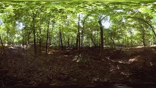 360 video: Relax in a Minnesota forest with peaceful classical music