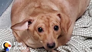 30-Pound Chiweenie Needed To Lose Half Her Body Weight | The Dodo