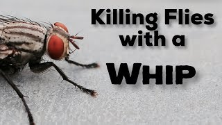 Killing Flies with a WHIP - Best Fly Swatter