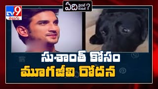 Fact Check: Sushant Singh Rajput's dog Fudge is alive or n..
