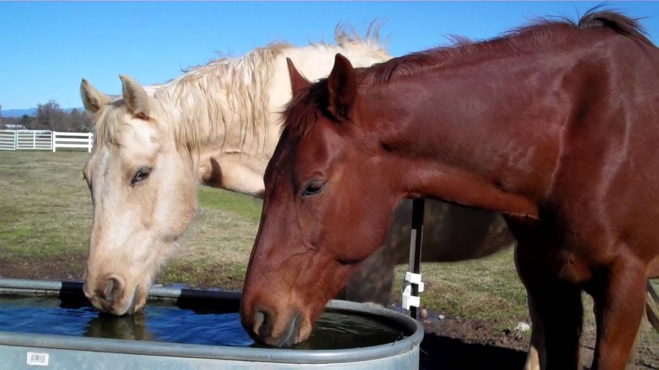 Two Horses Drinking Water Youtube
