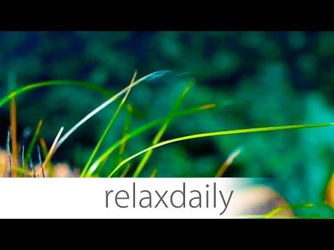 Light & Easy Background Music - Season 3