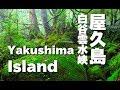 世界遺産「もののけ姫」の森の舞台  屋久島・白谷雲水峡  Princess Mononoke forest by Discover Nippon  on YouTube