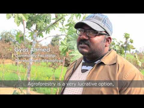 The Shubh Kal project: Agroforestry