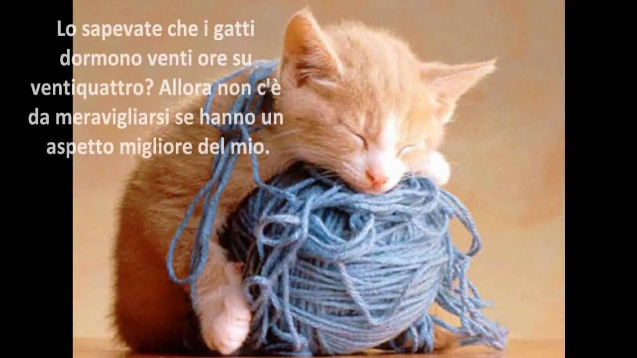 Gatti animali divertenti aforismi e foto youtube for Buongiorno con gattini