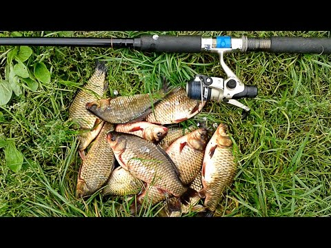 простая прикормка для рыбы