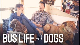 Bus Life With Dogs | Traveling With Pets Full Time