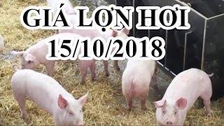 Giá lợn hơi hôm nay 15/10/2018 | Giá lợn hơi mới nhất