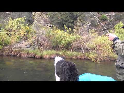 Upper Sacramento River Trout Dunsmuir
