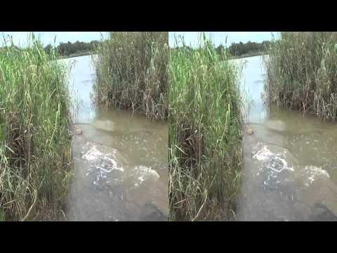 3D Crocodile Release
